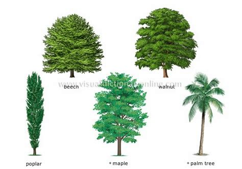tree types the english cubby types of plants