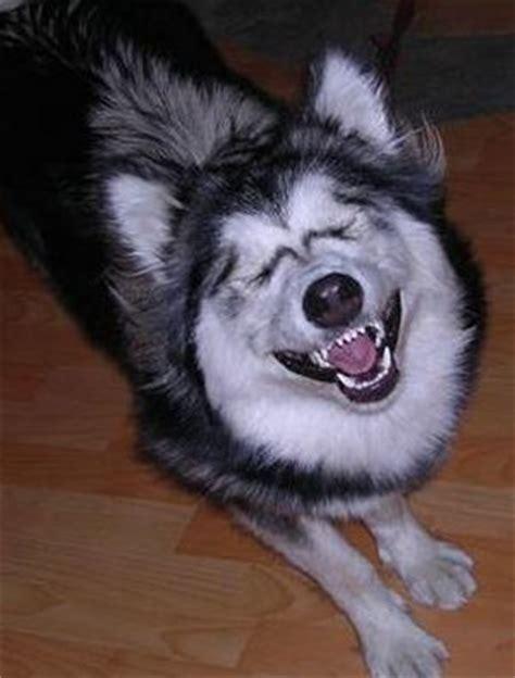 imagenes de smiledog jpg perro sonriente smile jpg creepypasta taringa
