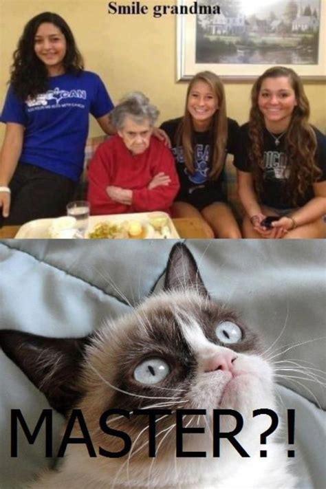 Frowning Dog Meme - 1000 ideas about cat jokes on pinterest grumpy cat