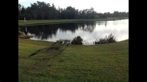 retention pond in backyard woman dies after car crashes into retention pond in winter