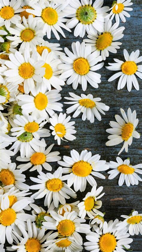 imagenes flores pinterest m 225 s de 1000 ideas sobre fondos de pantalla bonitos en