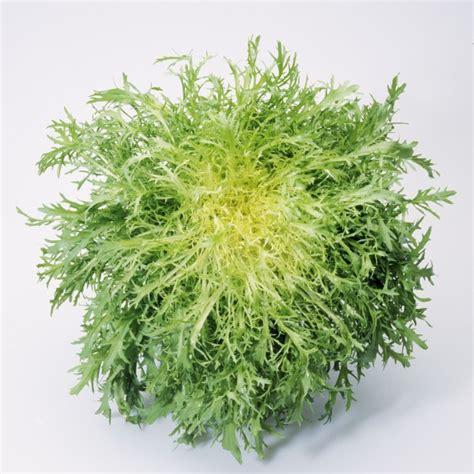 Napa Salad by I Declare War On Fris 233 E The Amateur Gourmet