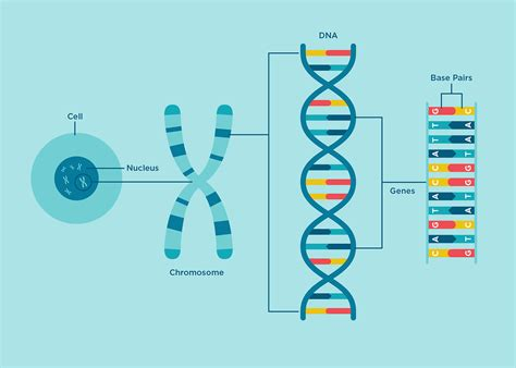 dna colors genetic research that helps individuals techonomy