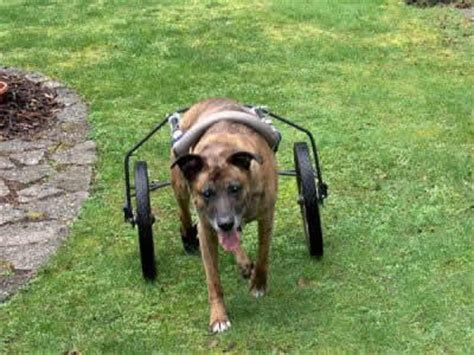 wheels for dogs rebound hounds diy wheels for dogs