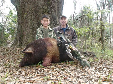 A Place Hunters Free Range Boar Bow Hunt In Florida For Hogs With Dogs Awesome By Youth