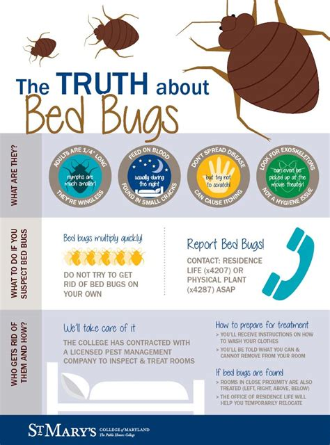 bed bug facts the truth about bed bugs office of residence life
