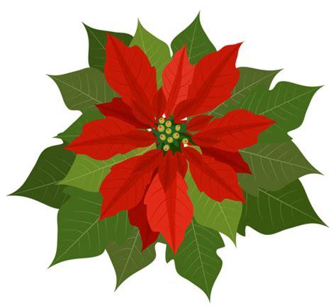 imagenes flores de navidad gifs y fondos pazenlatormenta im 193 genes de flores de navidad