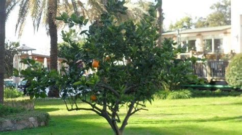 Garten Im Januar by Quot Garten Im Januar Quot Hotel Oleander In Side Kumk 246 Y