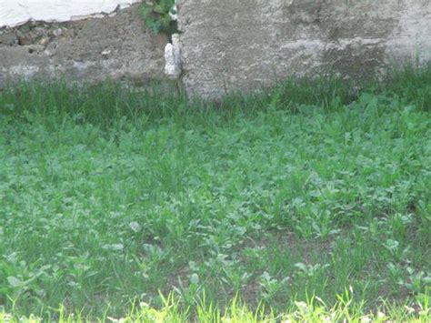 Schöner Rasen Ohne Unkraut 2066 by Unkrautvernichtung Im Rasen Unkrautvernichtung Im
