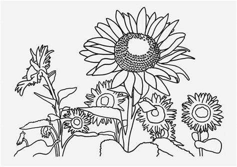sunflower garden coloring page pin coloring page sunflower on pinterest