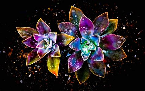 imagenes abstractas jpg coloridas flores abstracto gota de agua fondos de