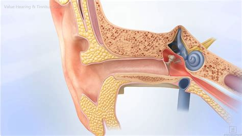 cross section of ear what to expect from a comprehensive hearing aid assessment