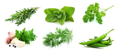 Green spice extracts for seasonings, Fresh green spices, Aromatic spices