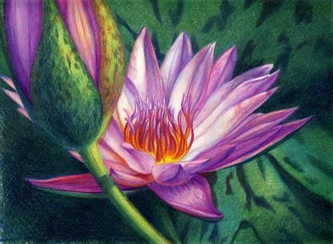 libro flowers in colored pencil veronica winters water lily colored pencil colored pencil art water lilies