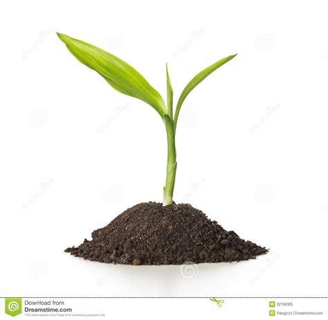 little plants growth royalty free stock photo image 32766305