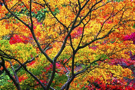 color photograph kaleidoscope of autumn color photograph by eggers photography