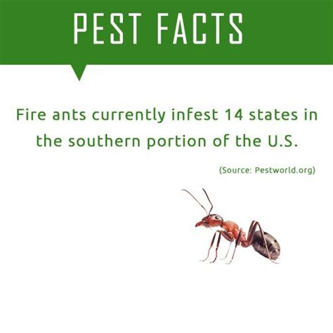 Ants Meme - 17 best images about pest facts on pinterest ants pets