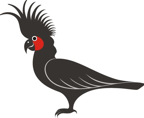 logo burung kakatua format vektor berita  papua