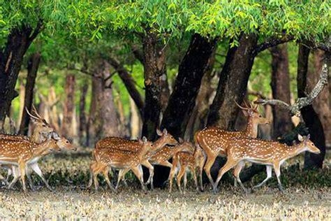 sundarbantours travel to nature with care sundarban tour