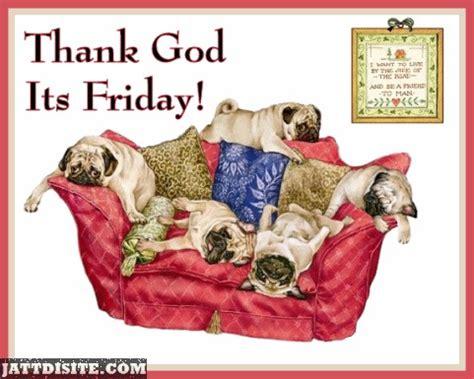 god pugs thank god its friday pug dogs jattdisite
