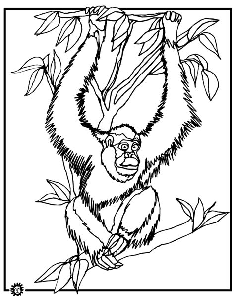 orangutan coloring pages coloring home