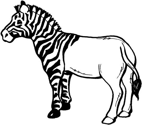 printable coloring pages zebra zebra coloring page free large images