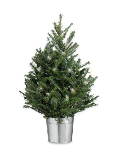 Tabletop Tree With Lights tabletop tree with lights williams sonoma