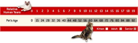 katzenjahre in menschenjahre tabelle basiswissen alte katzen