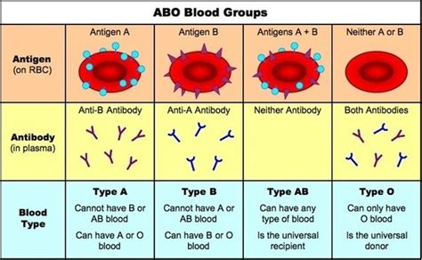 Ab Blood Type why can type ab blood accept blood from a and b type while