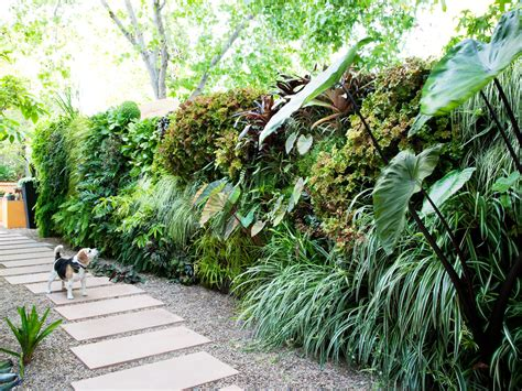 how to plant a lush living wall sunset magazine