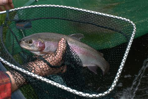 backyard fish farming trout what is aquaponics backyard aquaponicsbackyard aquaponics