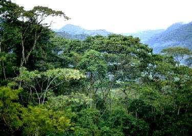 imagenes de bosques otoñales los bosques del mundo