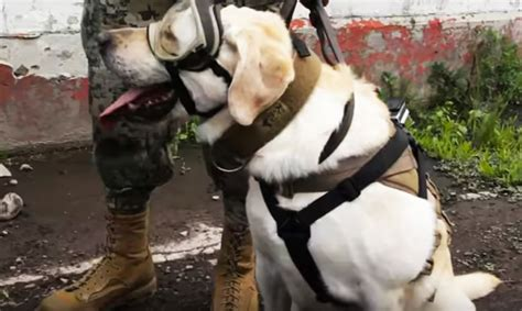frida the rescue frida the rescue helps search for survivors after mexico s deadly earthquake