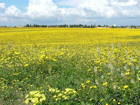 efficacia fiori di bach community
