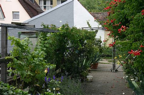 Katzensicherer Garten by Katzensicherer Garten Heimdesign Innenarchitektur Und M 246 Belideen