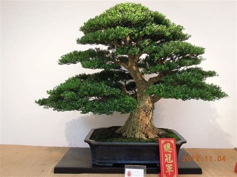 bonsai interieur jardiland bonsa 239