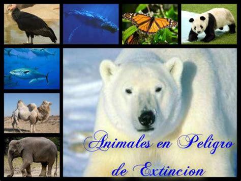 imagenes de animales en peligro de extincin 07 view image lista animales en peligro de extinci 243 n