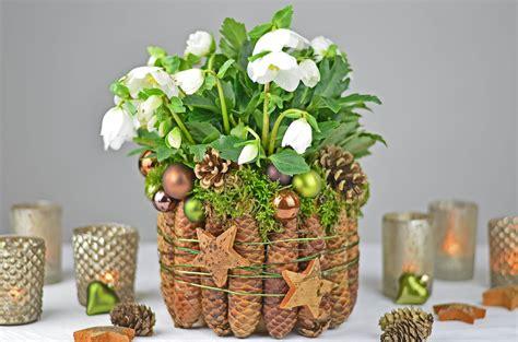 etagere weihnachtsdeko diy christrose dekorieren mit fichtenzapfen moos i