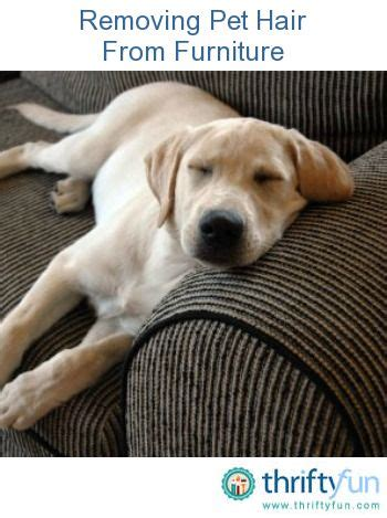 microfiber couch  remove  pets  pinterest