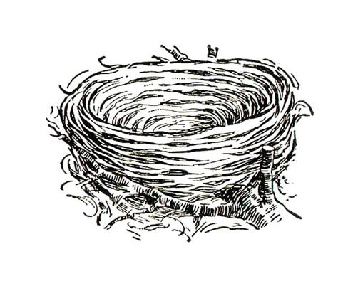 Coloring Page Nest by Free Coloring Pages Of Baby Birds Nest