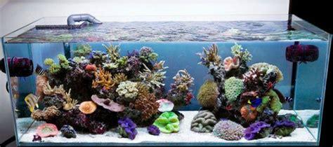 Decoration Of Aquarium by Decoration Aquarium