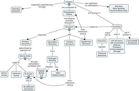 n protein function the gallery for gt protein concept map