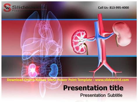 powerpoint templates kidney free download online kidney stone powerpoint template authorstream
