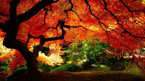 fall wallpaper for macbook 1366x768 maple in autumn desktop pc and mac wallpaper