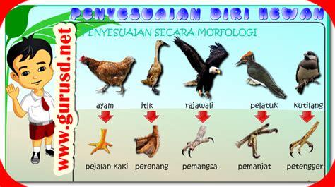 Buku Penyesuaian Diri media penyesuaian diri hewan morfologi dan