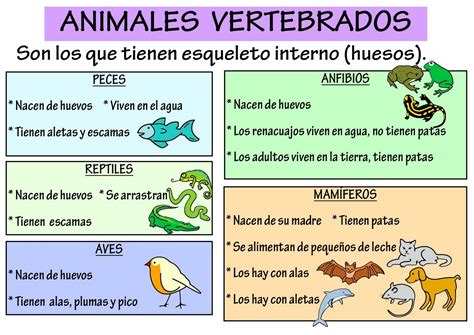 los animales vertebrados cuadros comparativos de vertebrados e invertebrados