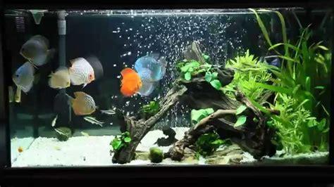 Aquascape Designs For Aquariums Discus Fish Tank Youtube