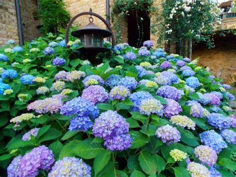 Garten Gestalten Hortensien by Hortensien Der Attraktive Akzent In Jedem Garten