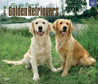 golden retriever calendar 2017 golden retriever calendar 2016 my calendar land
