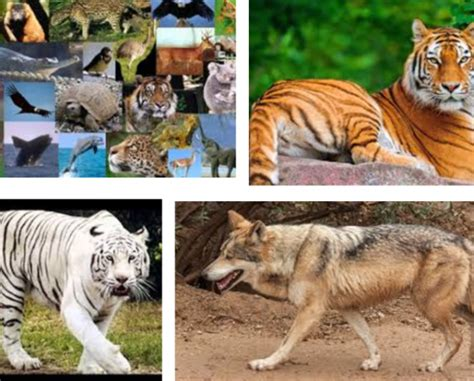 imagenes los animales en peligro de extincion cu 225 les son los animales en peligro de extinci 243 n